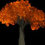 tree-1658813_1280